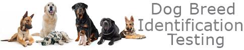 Dog Breed Identification Testing